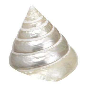 coquillages Muschel