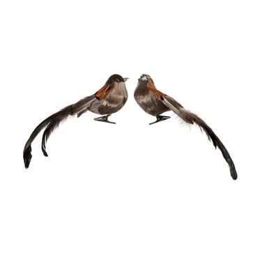 uccello MAIENSÄSS