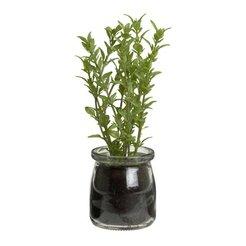 piante COOK
