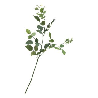 piante FLORA