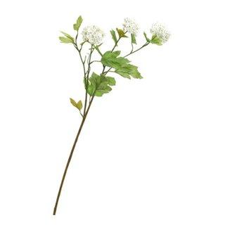 plante FLORA