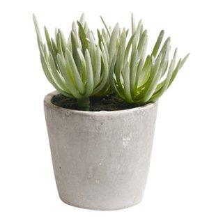 plante GIARDINO
