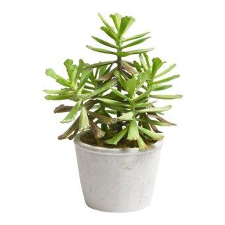 piante GIARDINO