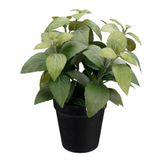 piante HERBS
